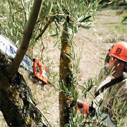 сучкорез для деревьев